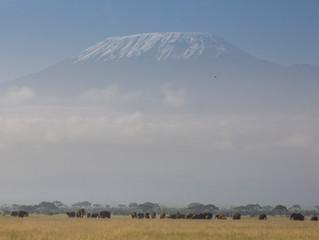 Elephants in the shadow of Kilimanjaro