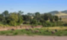 camping, safari, view, elephants, tents, Kenya, Maasai Mara, river, Serengeti,www.davesimpsonsafaris.com