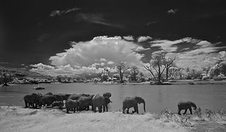 Infra red, www.davesimpsonsafaris.com, elephants, Kenya, Samburu, camping, safari