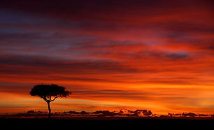 sunrise, dawn, Kenya, Maasai Mara, tree, clouds, reflections, camping, safari, www.davesimpsonsafaris.com.