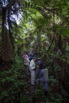 www.davesimpsonsafaris.com, Uganda, safari, adventure, Bwindi, trekking