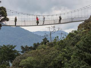 The Nyungwe canopy walk - Southern Rwanda