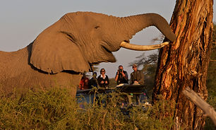 Elephant, Kenya, Amboseli, guests, safari, camping, viewing, close, www.davesimpsonsafaris.com