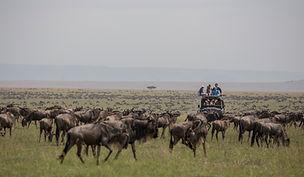 www.davesimpsonsafaris.com, camping, safari, wildebeest, Maasai Mara, Kenya