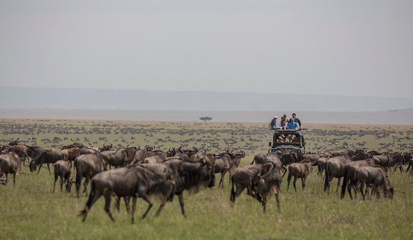 www.davesimpsonsafaris.com, www.kenya-camping-safaris.com, Kenya, Maasai Mara, safari, fun, adventure, wildebeest, migration