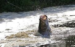 www.davesimpsonsafaris.com, Uganda, safari, adventure, Murchison Falls, Nile, River, perch, fishing