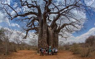 www.davesimpsonsafaris.com, Kenya, safari Tsavo, Ithumba, baobab, tree