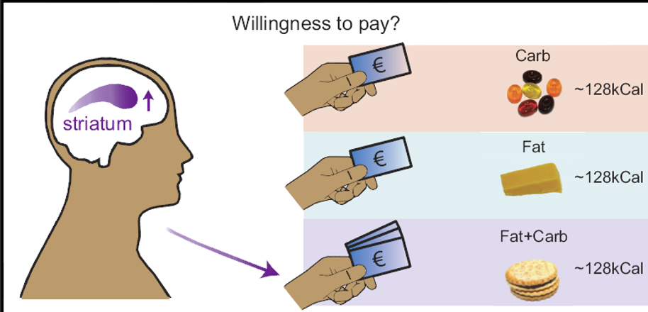 willingness-to-pay.png