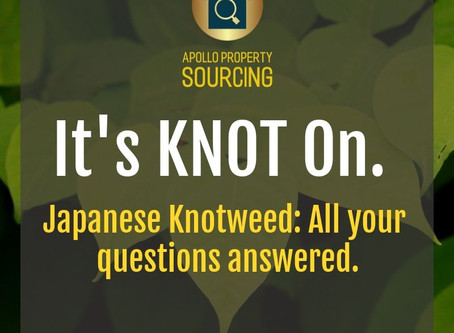 It's Knot On. Japanese Knotweed. All Your Questions Answered.