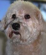 cute dog, groomed