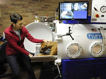 """hyperbaric veterinary medicine's steel veterinary chamber eliminates the possibility of rupture from """"crazing"""""""