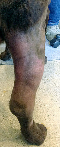 4/10/14 - Before 3rd HBOT Treatment