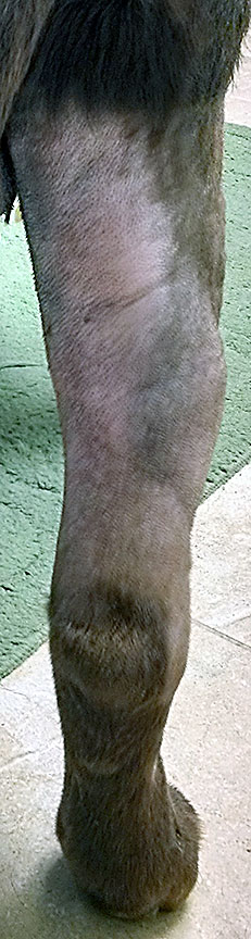 4/13/14 - 48 hrs after 5th Treatment