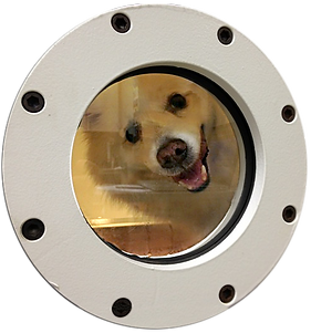 hvm's Hyperbaric Chamber is 100% safe and painless for all pets