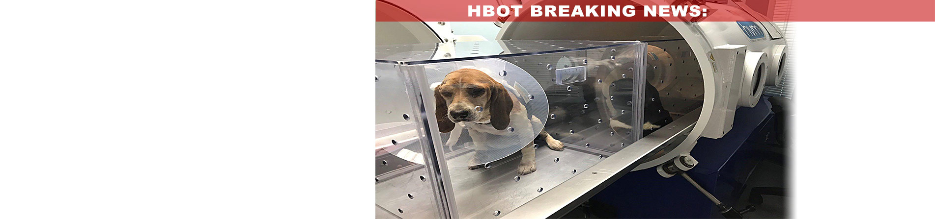 BREAKING_NEWS-CARE_Beagles_Fire