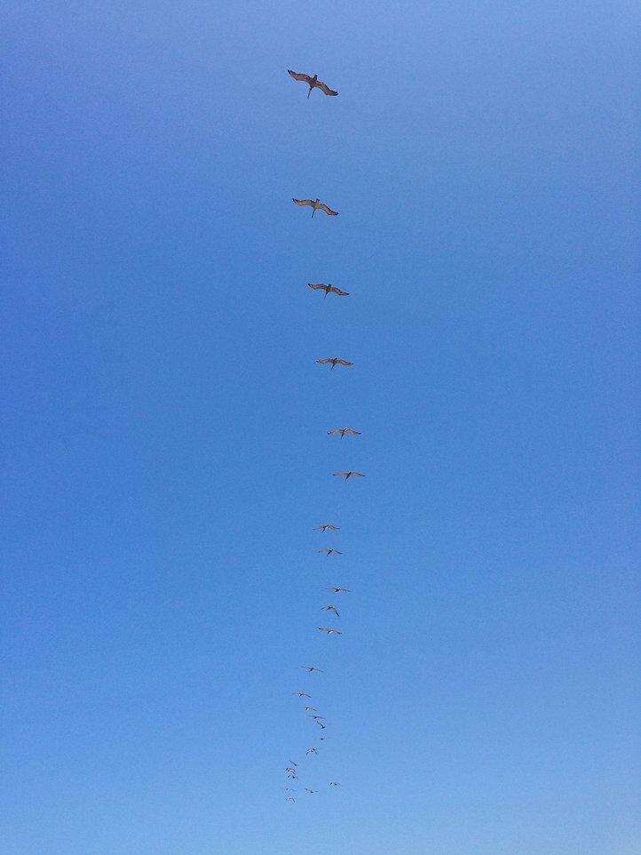 Robb Hart - Free as a bird_.jpg