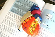 Heart%2520model%2520to%2520explain%2520h