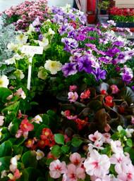 May Flowers.jpg