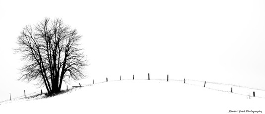 Single Tree & Fence B&W 2.jpg