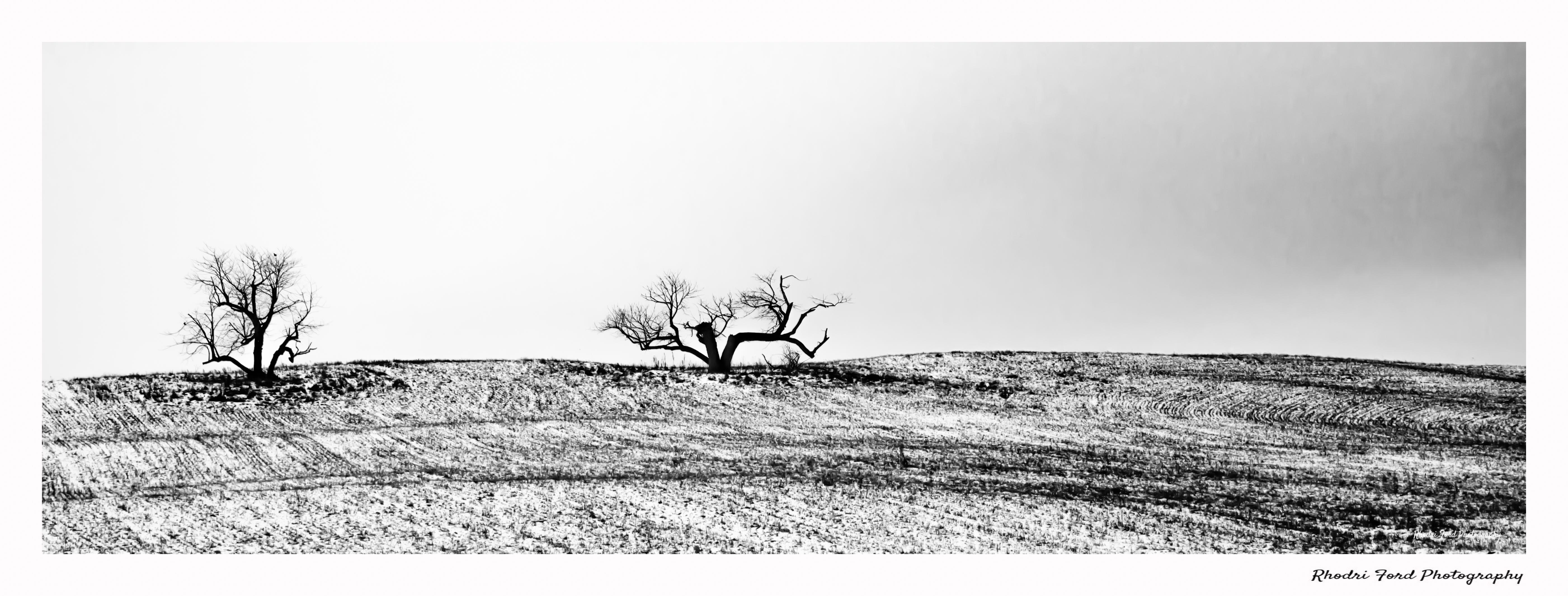Two Trees Panoramic B&W