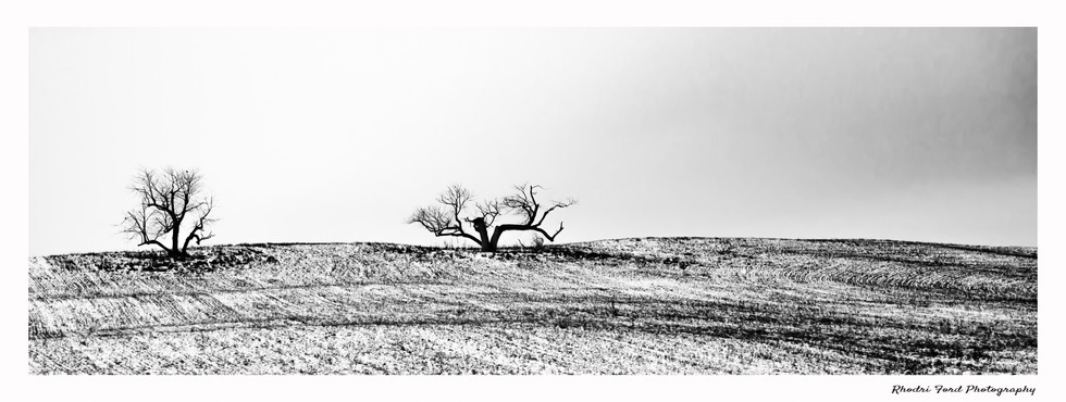 Two Trees Panoramic B&W.jpg