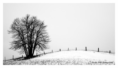 Single Tree & Fence B&W.jpg