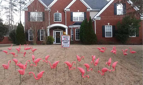 Flamingos by the Yard