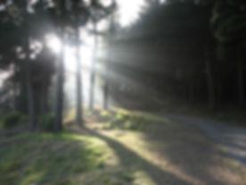 oamaru forest (640x480).jpg
