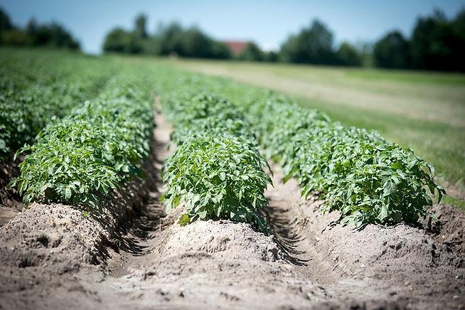 agriculture-2654157_960_720.jpg