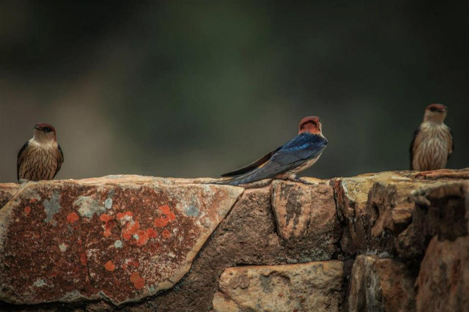 Wonderful Birdlife