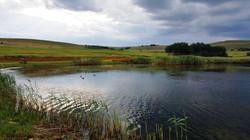 Summer evening on Loch Heron dam