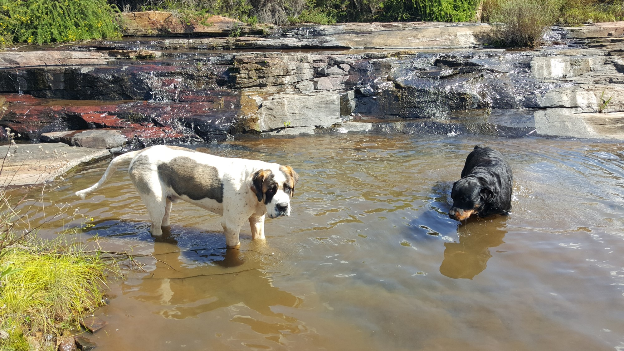 bandit & Jerry cooling off