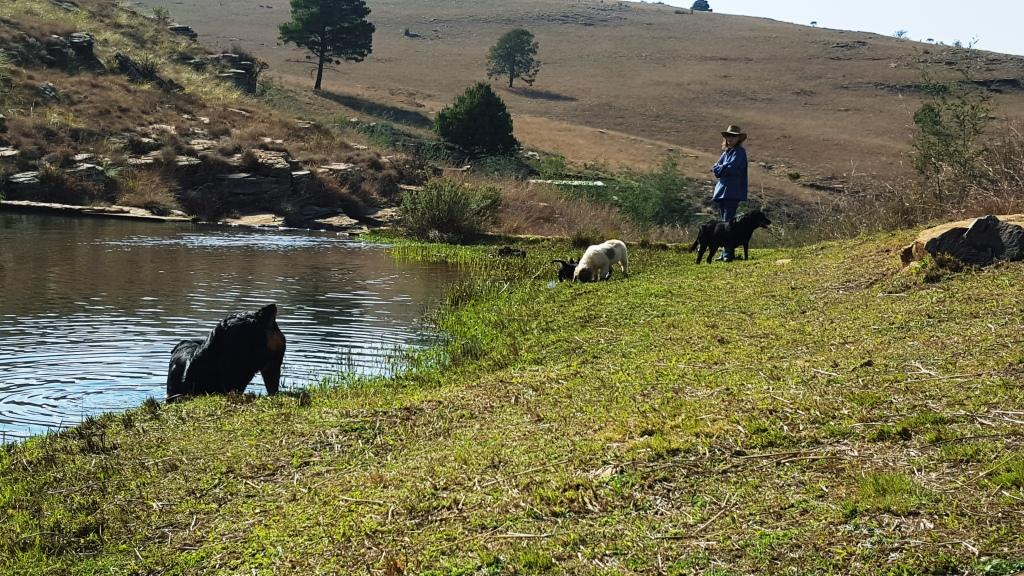 Jerry & Bandit Explore the riverbank