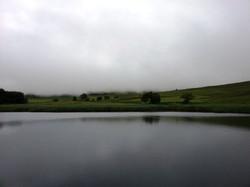 A Misty Loch Heron