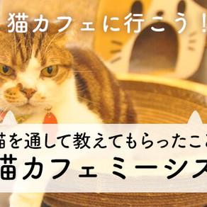 猫ねこ部にてミーシスが掲載されました