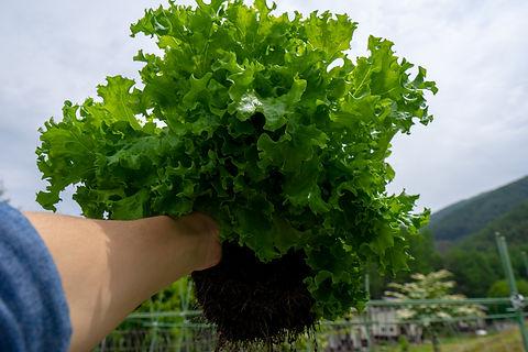 辰野町 川島 野菜