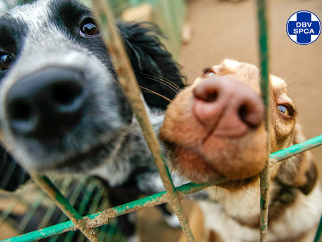 SPCA urges people to find alternative accommodation for pets while they're away