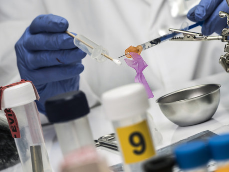 No forensic DNA analyses have been done so far this year