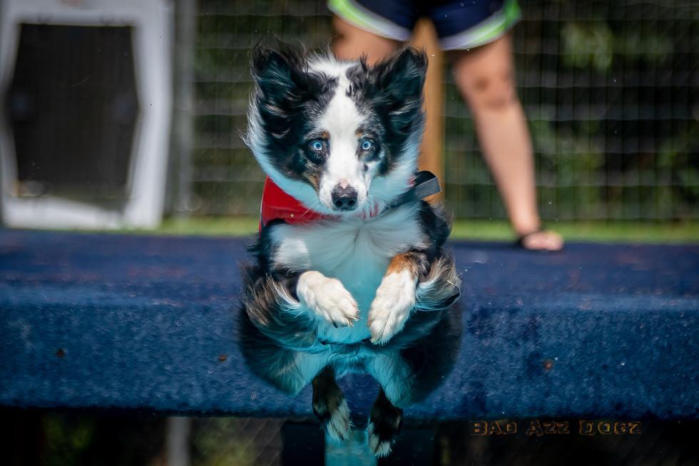 Dogwalker-Sep14-2019-163