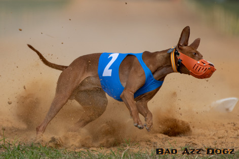 Lure-Race1-12-18-164