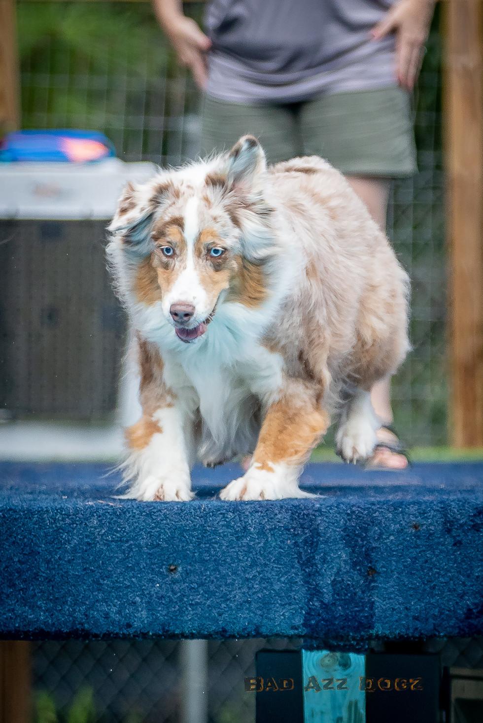 Dogwalker-Sep14-2019-182