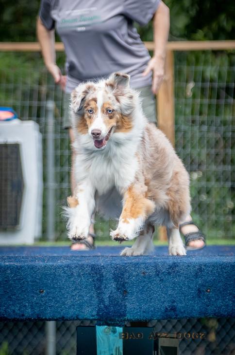 Dogwalker-Sep14-2019-181
