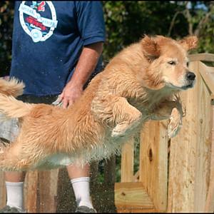 Ocala Dog Ranch - Fall Splash