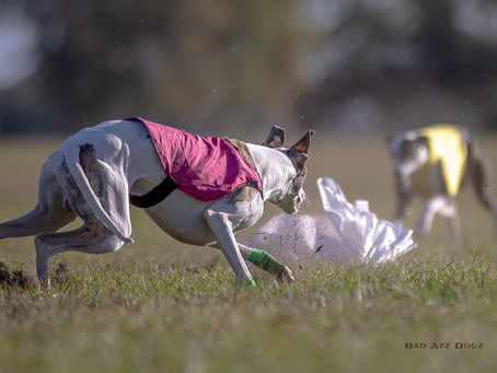 Florida Lure Coursing March 2020