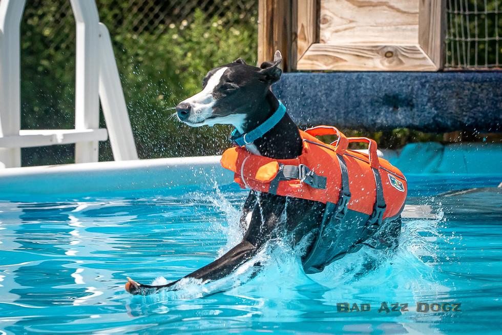 Dogwalker-Sep14-2019-325