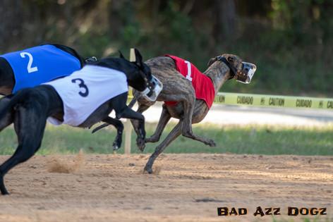 Lure-Race1-12-18-124