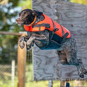 Fall Dock Dive AM - Dog Walker Ranch