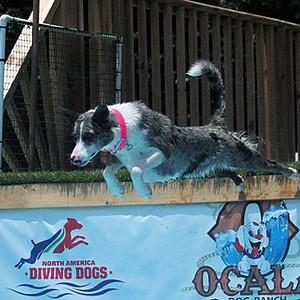 Ocala Dog Ranch NADD