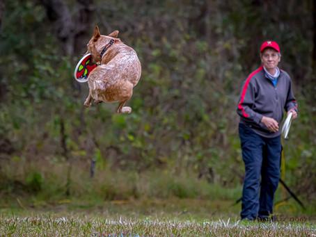 Frisbee Dog Ranch - Jan Wrap