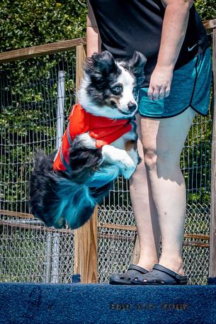 Dogwalker-Sep14-2019-340